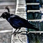 Sometimes I Just Want To Crow, Othertimes I'm Kind Of On The Fence by Rick Gold