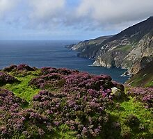Coastal Heather by Kat Simmons