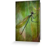 Banded demoiselle   (Calopteryx splendens) Greeting Card