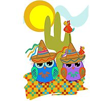 Cute Sombrero Owls, patterns and  Parrots Photographic Print