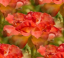 Roses Galore by Judi FitzPatrick