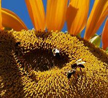 Moon Bees by tayloredbytessa