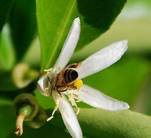 Bee Butt by tayloredbytessa