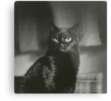 Portrait of black cat square black and white analogue medium format film Hasselblad  photograph Metal Print