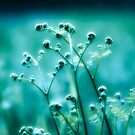 Oblivion's Garden by boxx2genetica