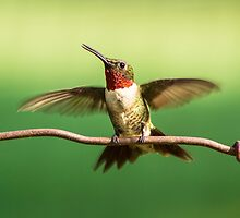 Preparing for Lift-off by Janice Carter