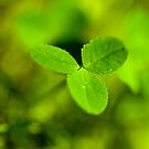 Heart of a Clover by boxx2genetica