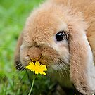 Curious Bunny by julieapearce