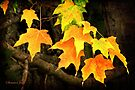 And So It Begins...Autumn by SummerJade