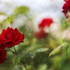 Roses are Red ...... by Lynda Heins
