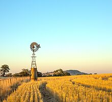 Along the fence line...tall & proud....Windmill !!! at dusk. by mitpjenkeating