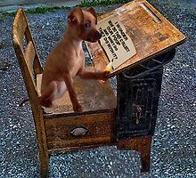 AS I WRITE MY THOUGHTS I WONDER WHY THEY..?? CANINE,DOG,chihuahua >>PICTURE.. by ✿✿ Bonita ✿✿ ђєℓℓσ