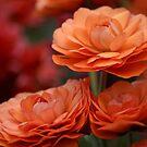 Orange Trio by Jessica Fittock