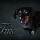 Dachshunds Tina by ALIANATOR