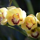 Yellow Orchid by Jessica Fittock