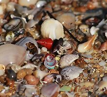 A Shell of a Beach by Stuart Daddow Photography