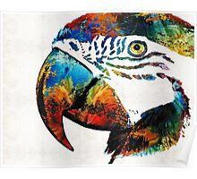 Parrot Head Art By Sharon Cummings Poster