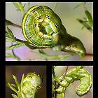 The Asteroid Moth Caterpillar by DigitallyStill