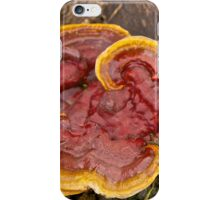 Kidney-Shaped Tooth Polypore iPhone Case/Skin