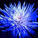 Feeling blue... by Terri~Lynn Bealle