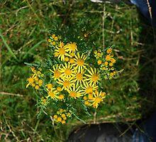 flower between nike by domelaci