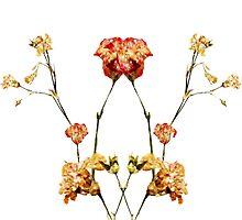Flowers In by Roisin Bogle