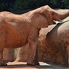 Happy Elephant by Scott Mitchell