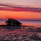 One Mangrove at Sunset. by Bette Devine