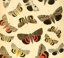 butterflies by #Palluch #Art
