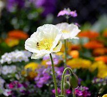 Springtime by Jessica Fittock