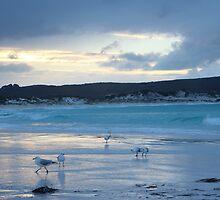Gulls at their chores by Richard Lawley