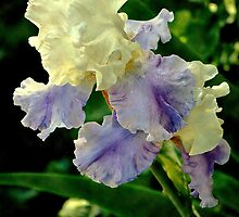 Just Call Me Iris.... by Karen  Helgesen