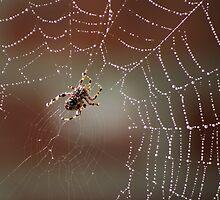 Web Weaving by Gilda Axelrod