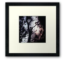 Tree branches on summer evening  in Spain square medium format film analogue photographer Framed Print