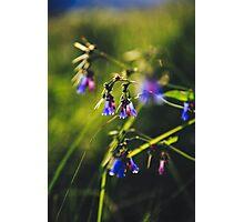 Valley Bluebells Photographic Print
