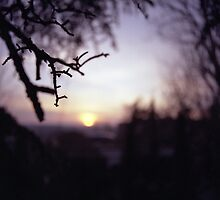 Tree branch in silhouette against sunset dusk evening sky square medium format film analog photographers by edwardolive