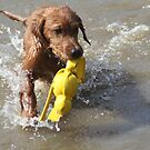Marlin- First Water Fetch! by goldnzrule