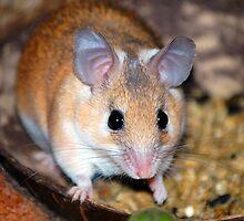 Curious Hamster by BuffaloBob