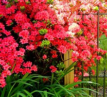 Garden Flowers-By the Fence    ^ by ctheworld