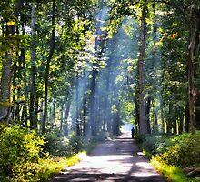Morning Stream of Light by Brian Gaynor