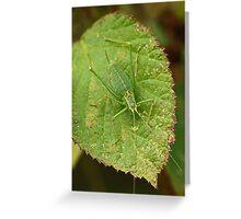 Speckled Bush Cricket Greeting Card
