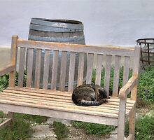 Sleeping Cat On Wooden Bench by Mythos57