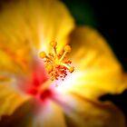 Up Close & Personal. by Jennifer Bishop