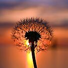 Dandy Sunset by Debbie  Maglothin