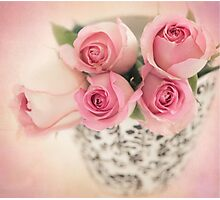 Four pink roses Photographic Print