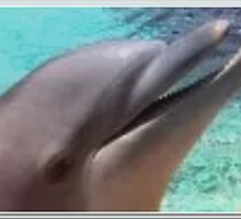 Cute Mommy Dolphin♡ by Princess1222