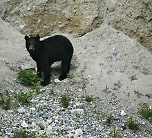 Mountain Bear by ashmphotography