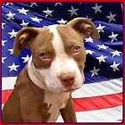 American pitbull Terrier puppy by ritmoboxers