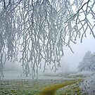 frosty dream.... by globeboater