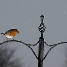 Robin in the rain by turniptowers